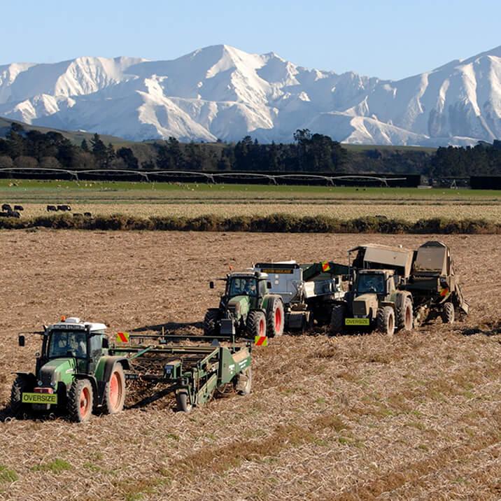 April - harvesting onions