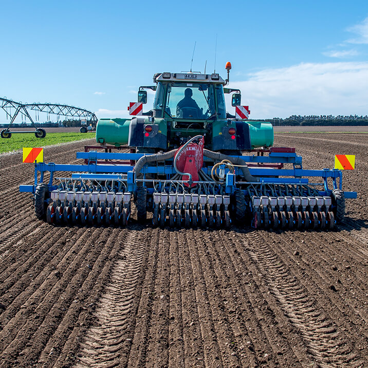 August - planting onions
