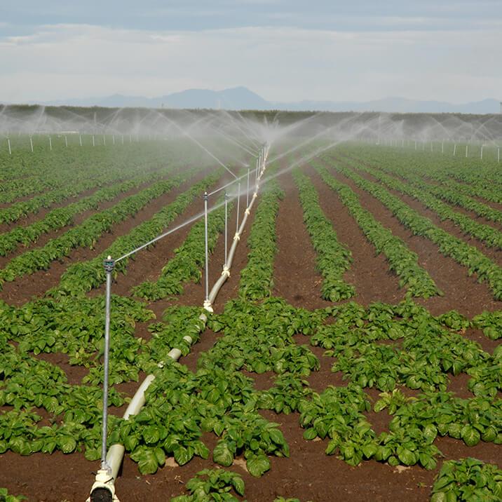 November - irrigating begins and fertiliser is going onto the vegetable crops